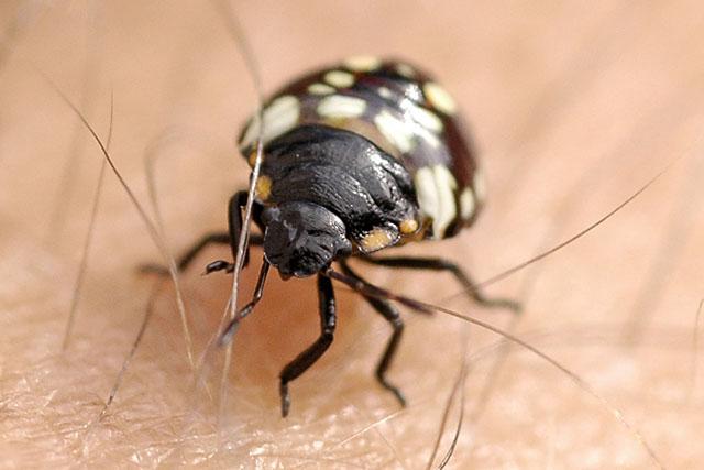 Ózongenerátor rovarok ellen