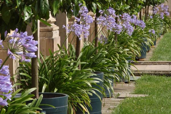 Igénytelen növények kertbe