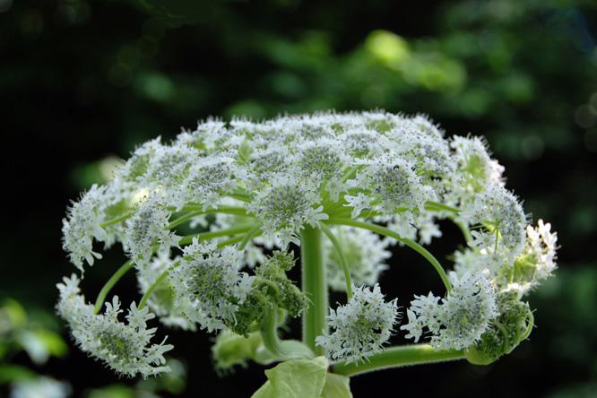 Szép fehér növény 406542dd5a