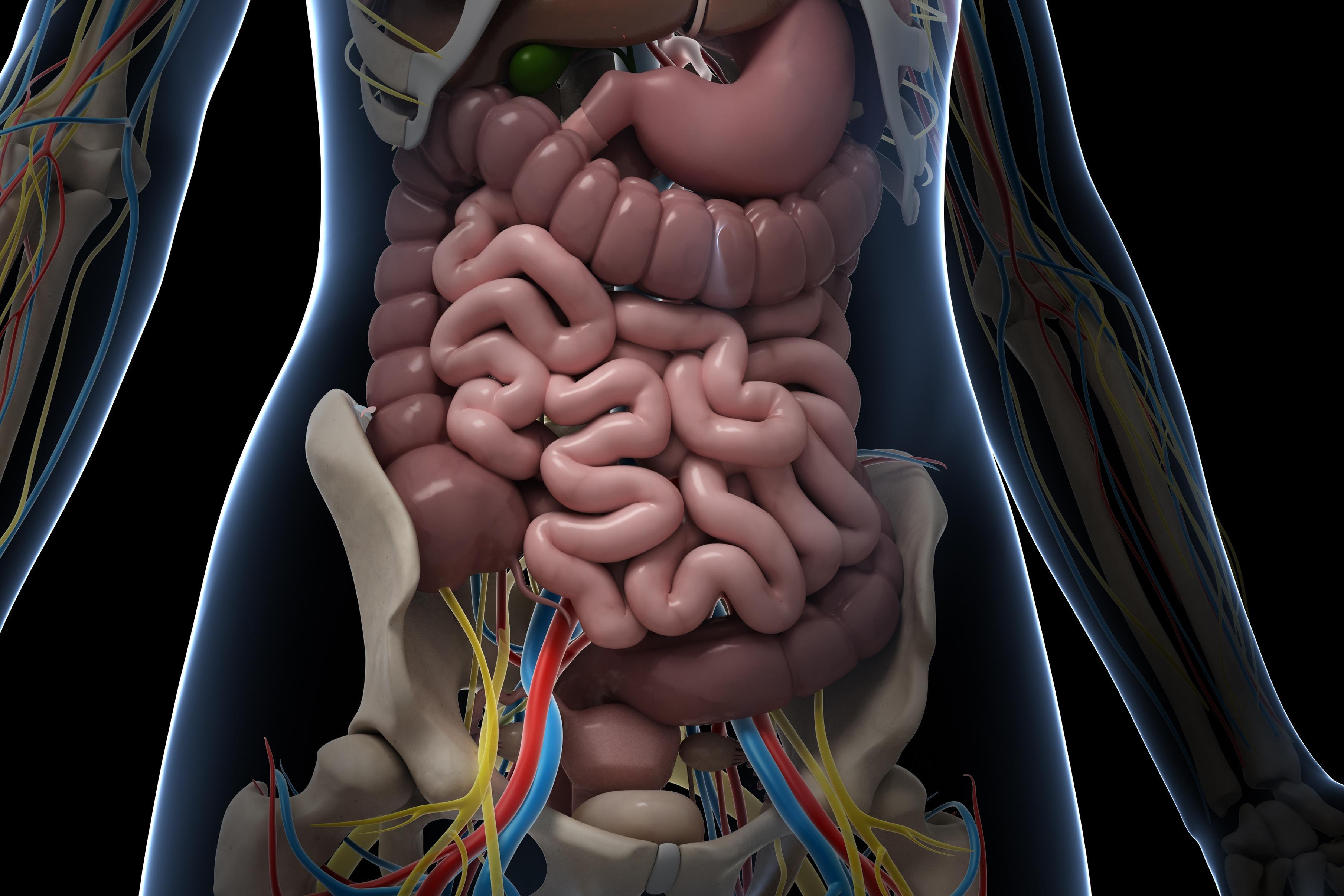Új szervet azonosítottak az emberben