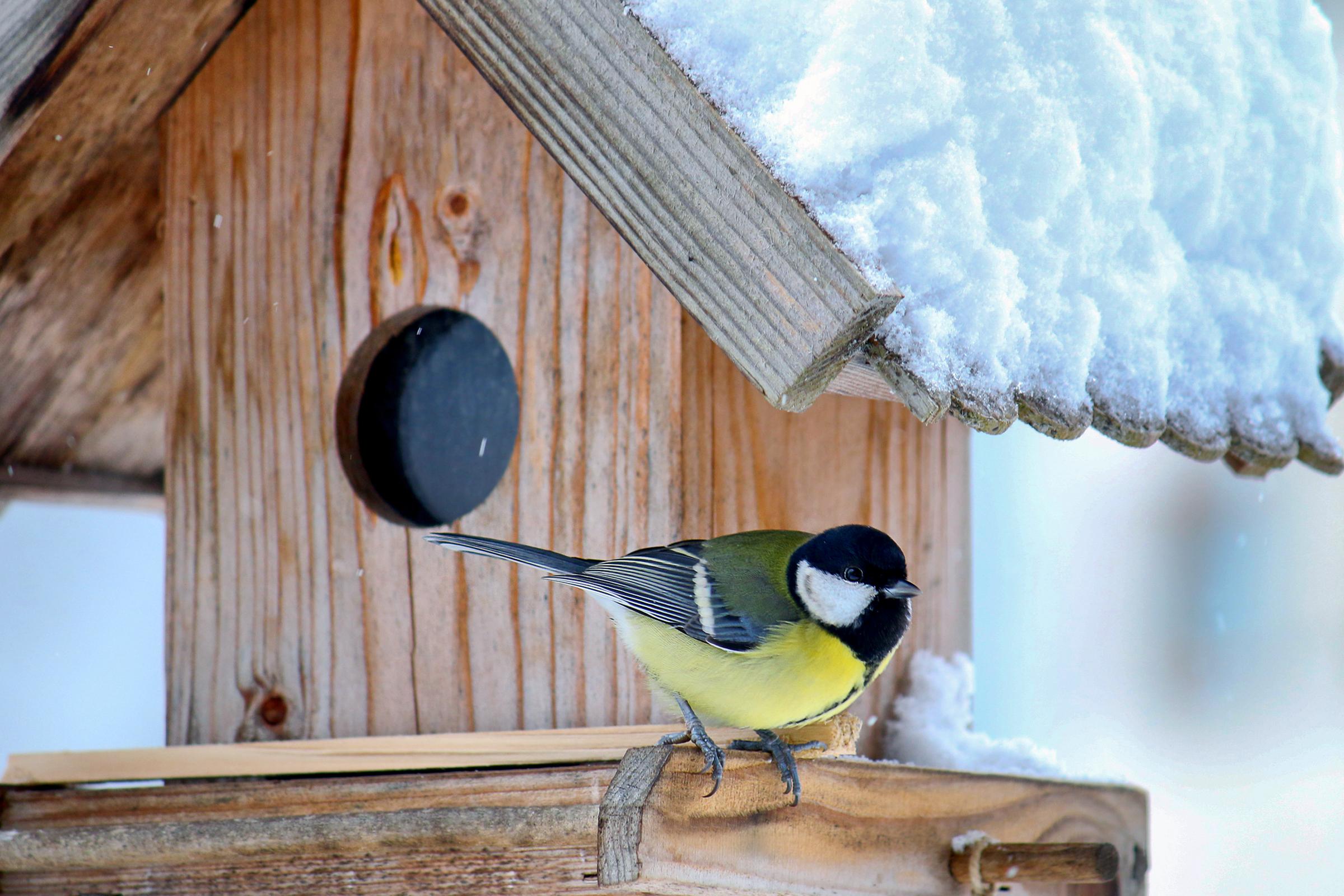 A madarak közelsége jót tesz a mentális egészségnek
