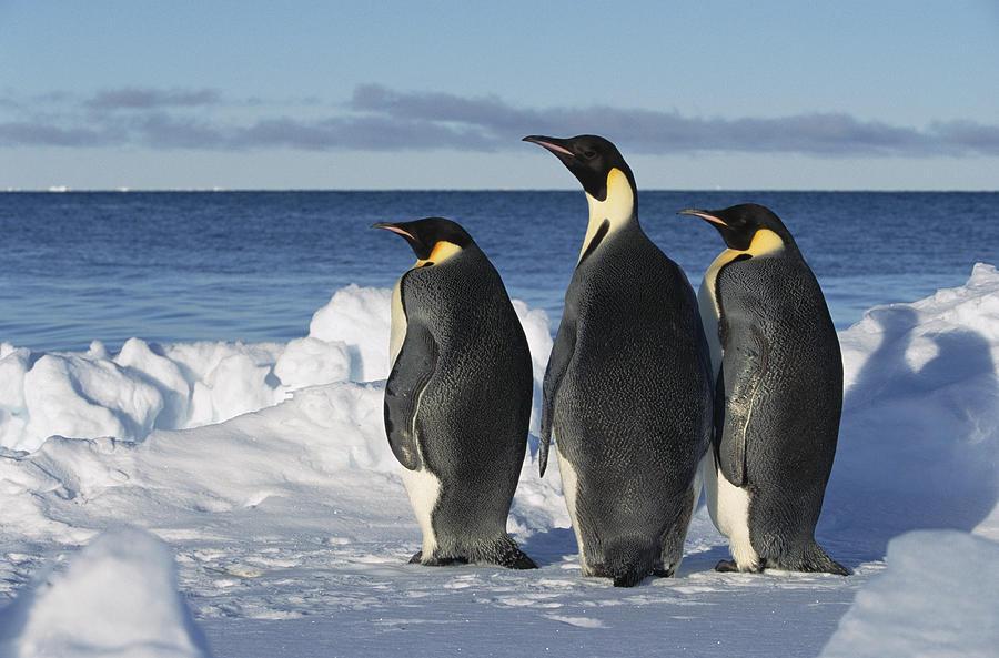 """Videóra vették, ahogy a pingvinek a víz alatt """"beszélgetnek"""""""
