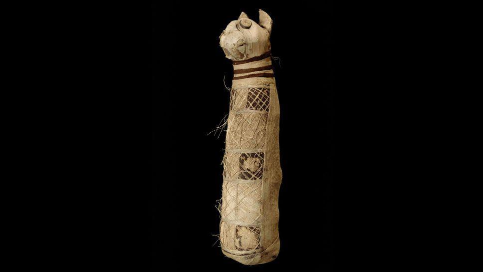 Nem fogja elhinni, mit találtak az ókori macskamúmia belsejében