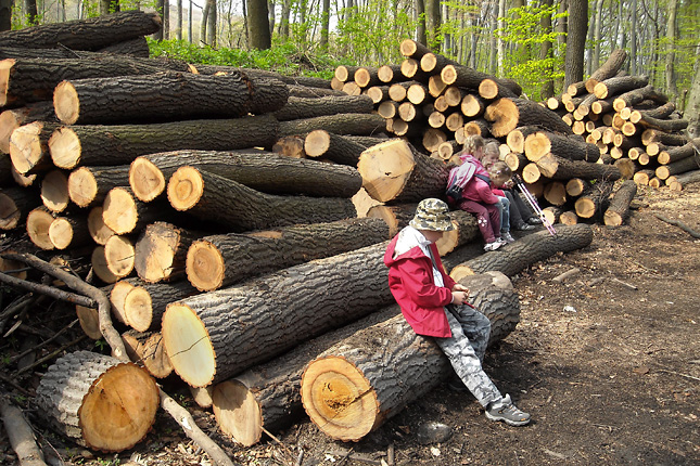 Ezért érdemes családdal az erdő közelében élni