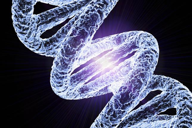hogy a toxoplazma hogyan hat az agyra