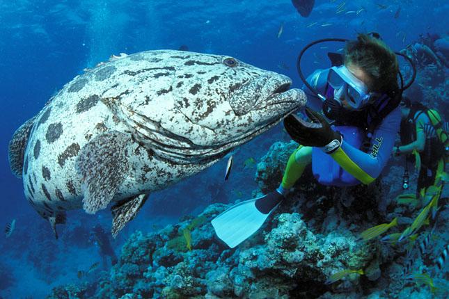 Nagy hal Ausztrália