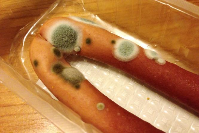 Penész itt is, ott is- háztartási tudnivaló a káros gombákról