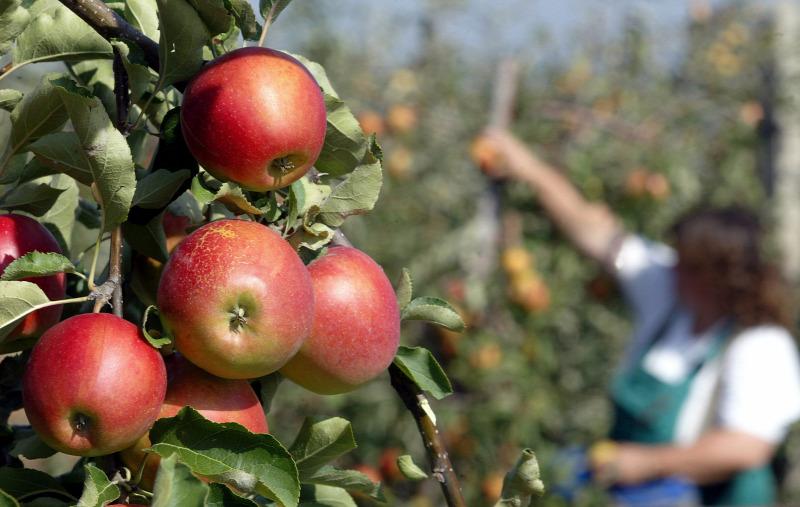 nő alma találkozó)