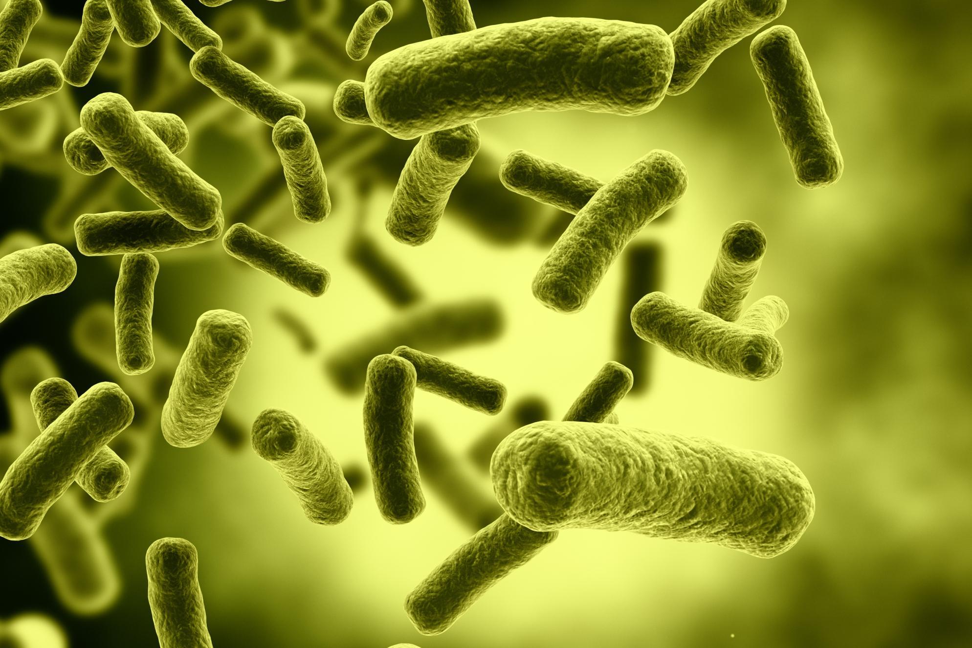 élő egészséges baktériumok)