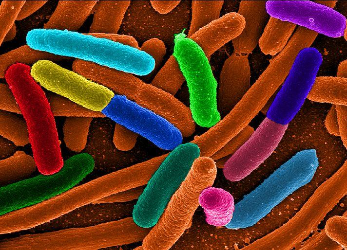 Génmódosított baktériumokkal keresik a taposóaknákat