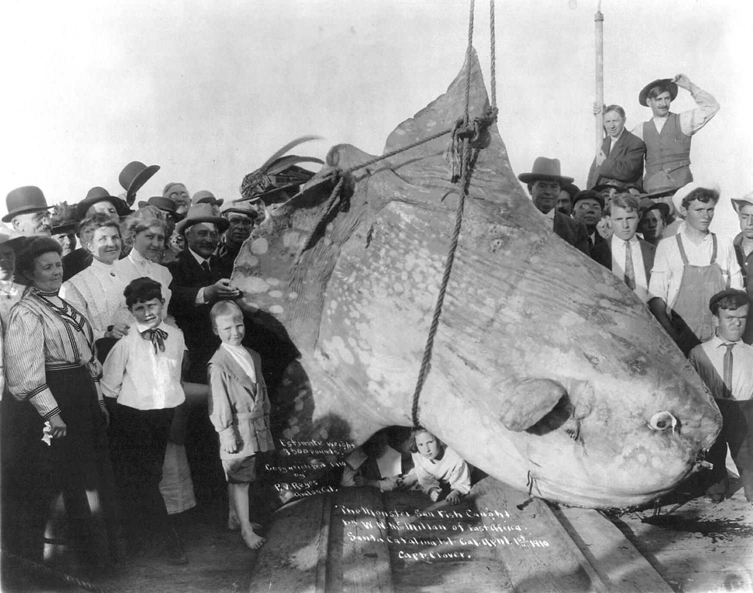 Randevú 1910-ben