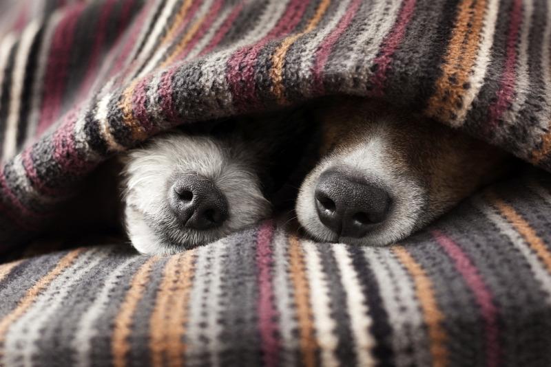 Online társkereső indult kutyáknak