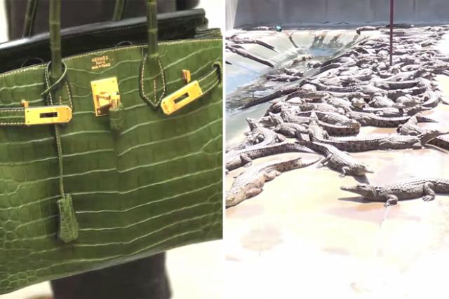 Fémrudakkal böködik a krokodilok agyát - Így készül a híres táska! 208eae6fc2
