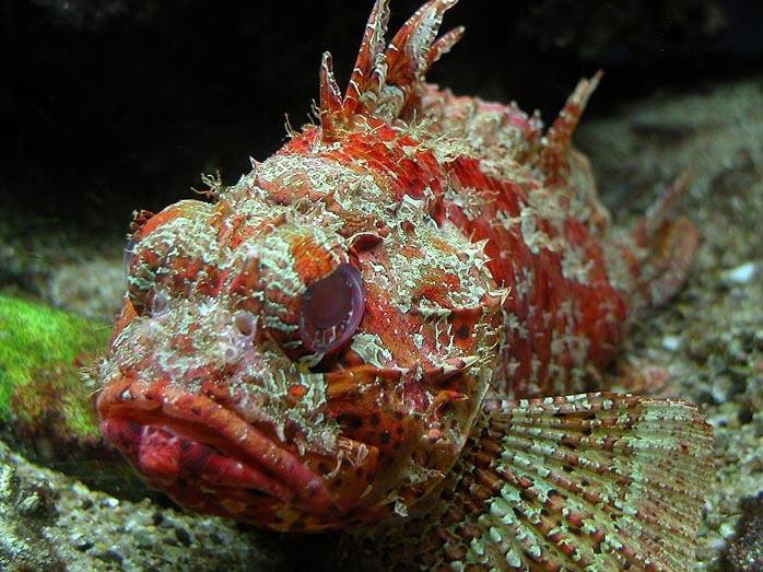 fajok közötti halak randi