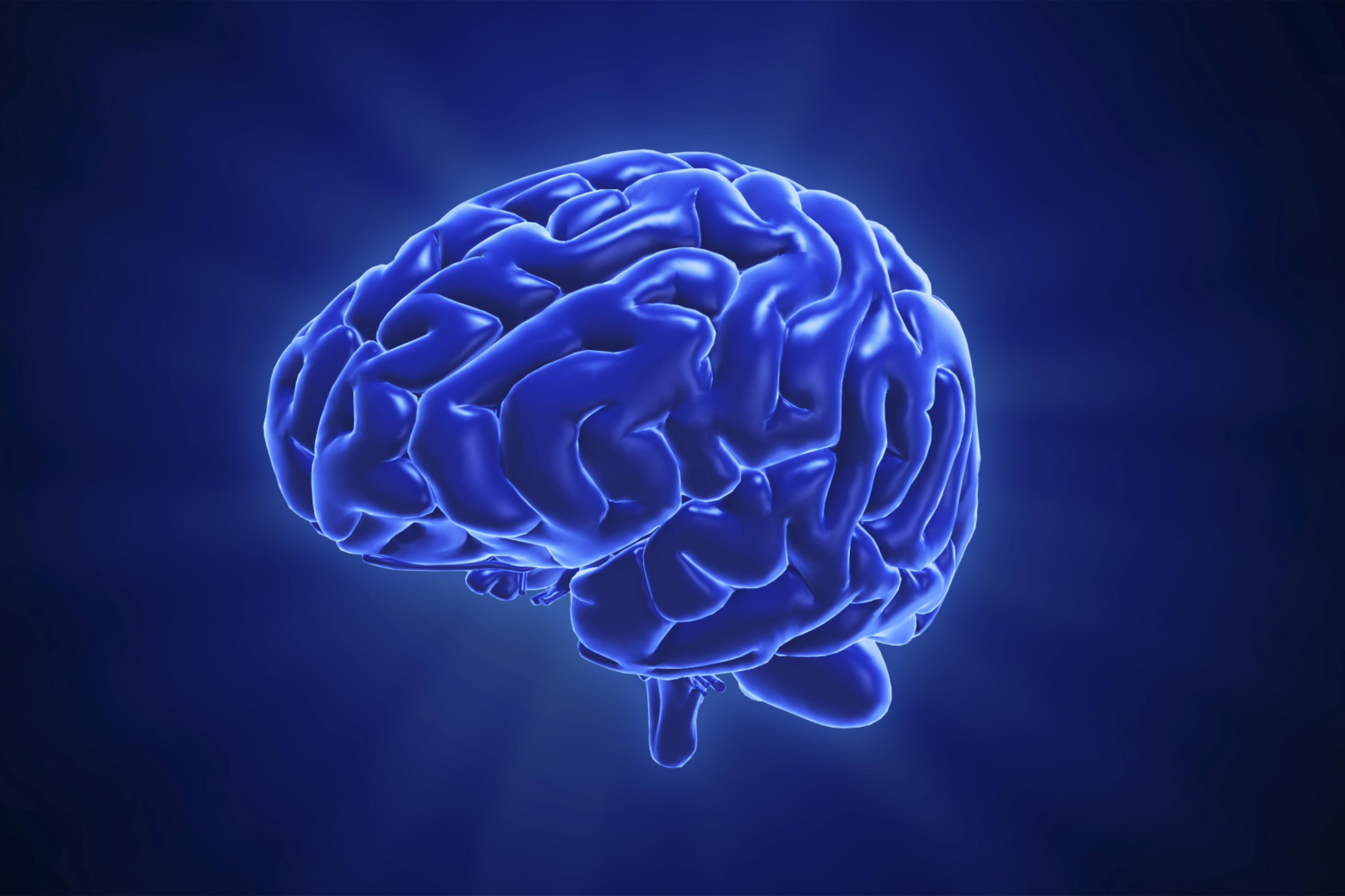 az emberi agy látása)