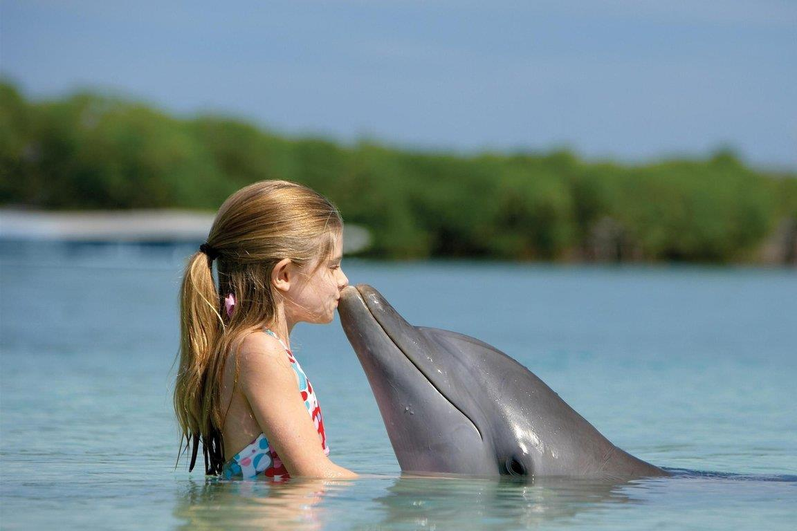 delfinek róluk és látásukról)