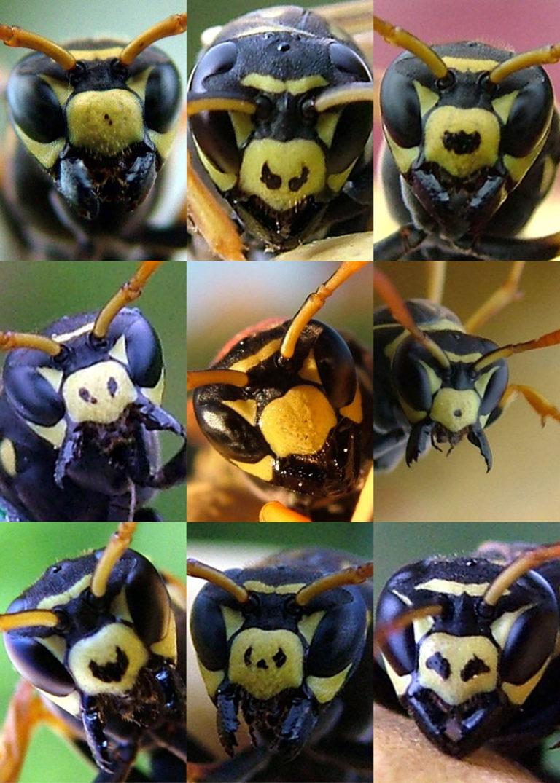 Fekete hangyák szex