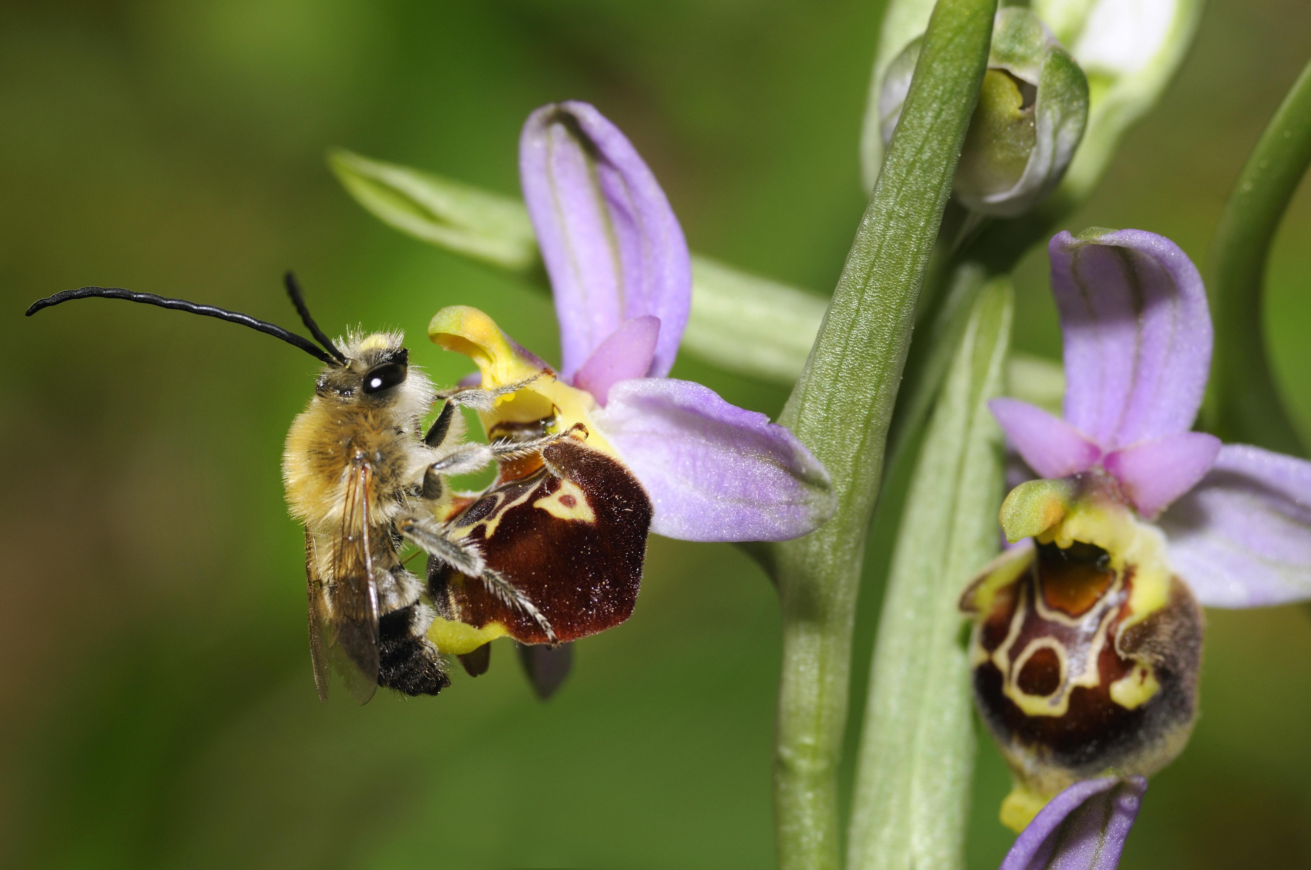 A rovarok 1-2 százaléka eltűnhet évente a Föld színéről