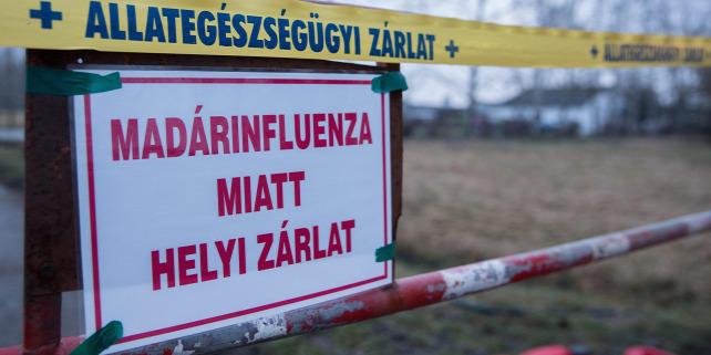 Forrás: MTI/Rosta Tibor