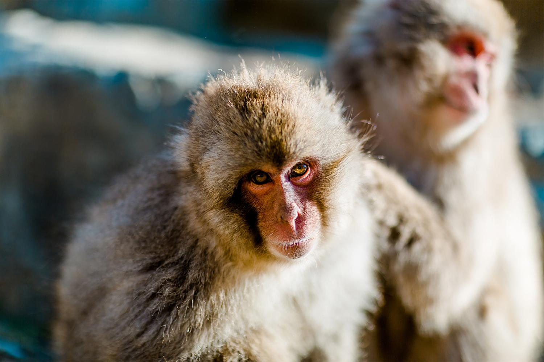 majom leszbikus szex kis mellek és szűk punci