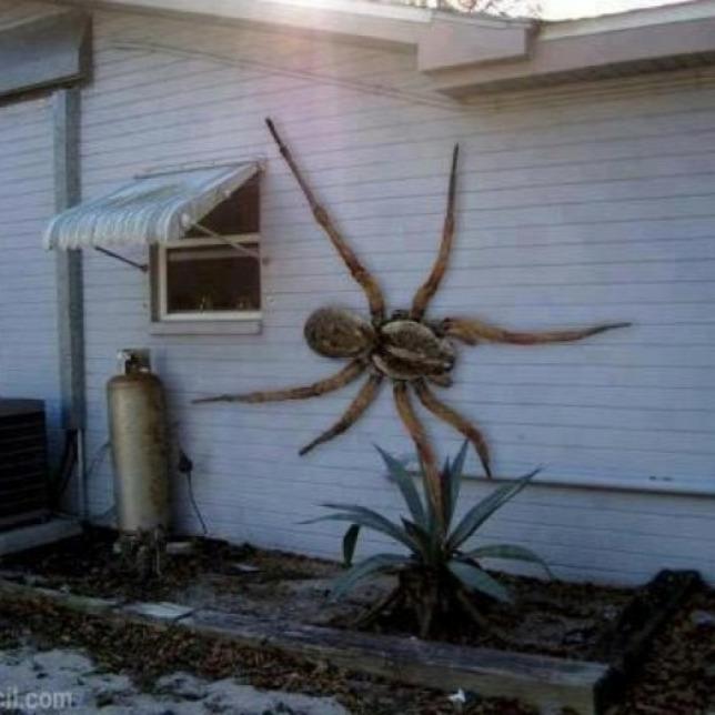 A pókiszonyosok rémálma tűnt fel Hawaiin