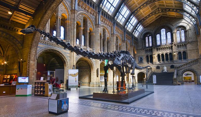 Randi dinoszauruszok csontok