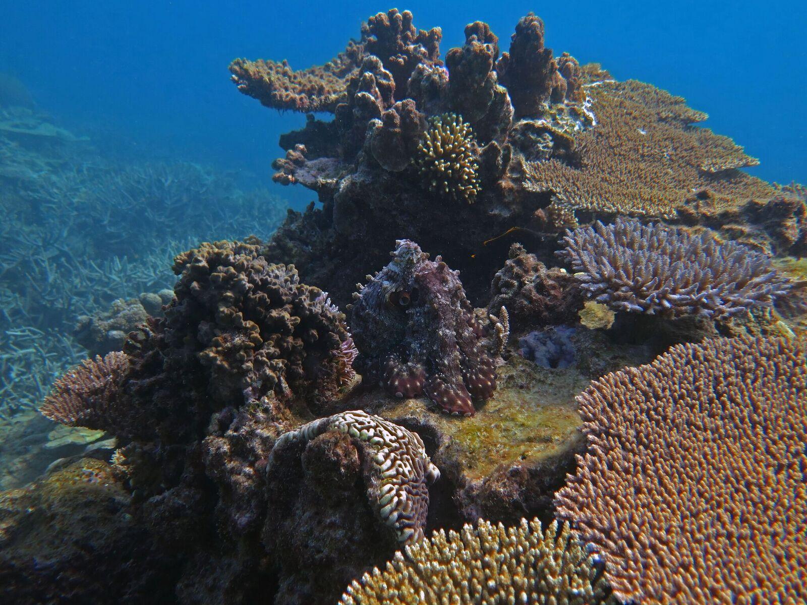 Furcsa módon alkalmazkodnak a polipok az óceánok növekvő savasságához
