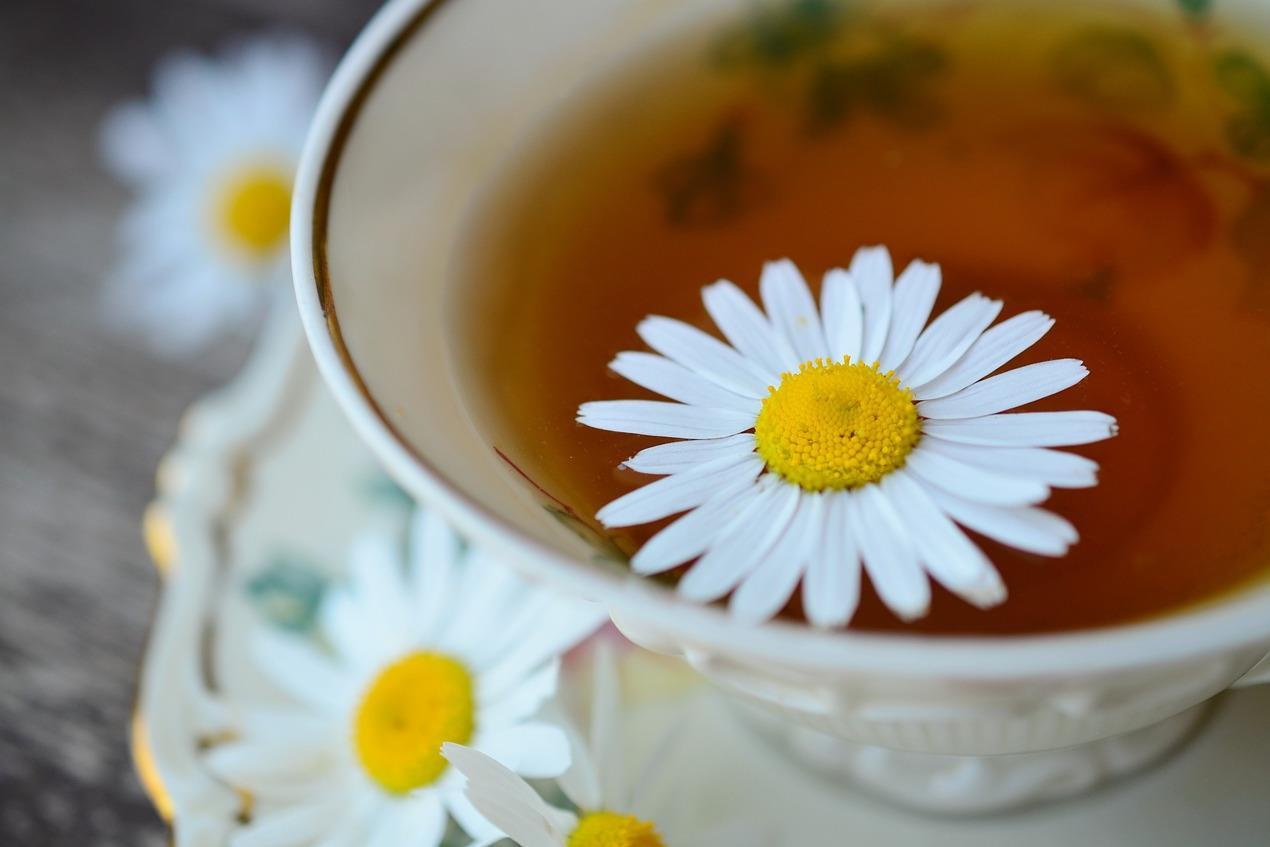Kamilla tea köhögésre