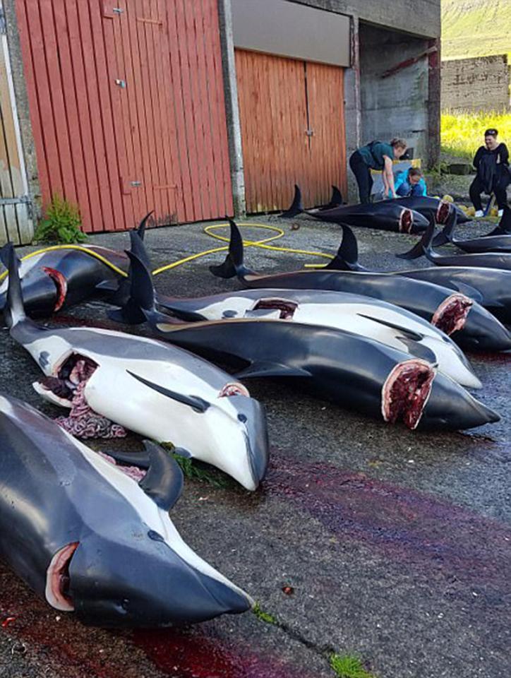 rengeteg bálnák randi 100 ingyenes társkereső oldal, Calgary