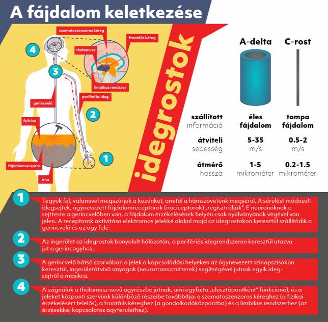 kondroprotektorok gyógyszerek osteochondrozis kezelésére