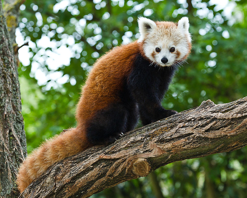 otthoni videó fajok közöttleszbikus film videók