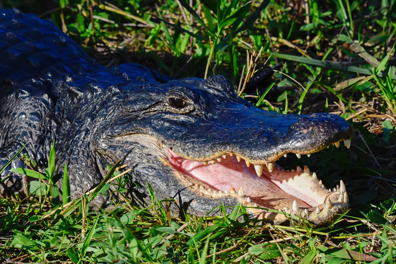 Florida állami parkok, teljes horoggal