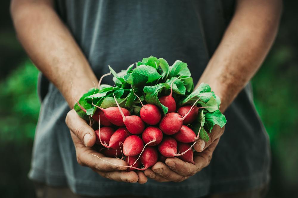 Itt a tavasz, ezeket az idényzöldségeket keressük a piacon