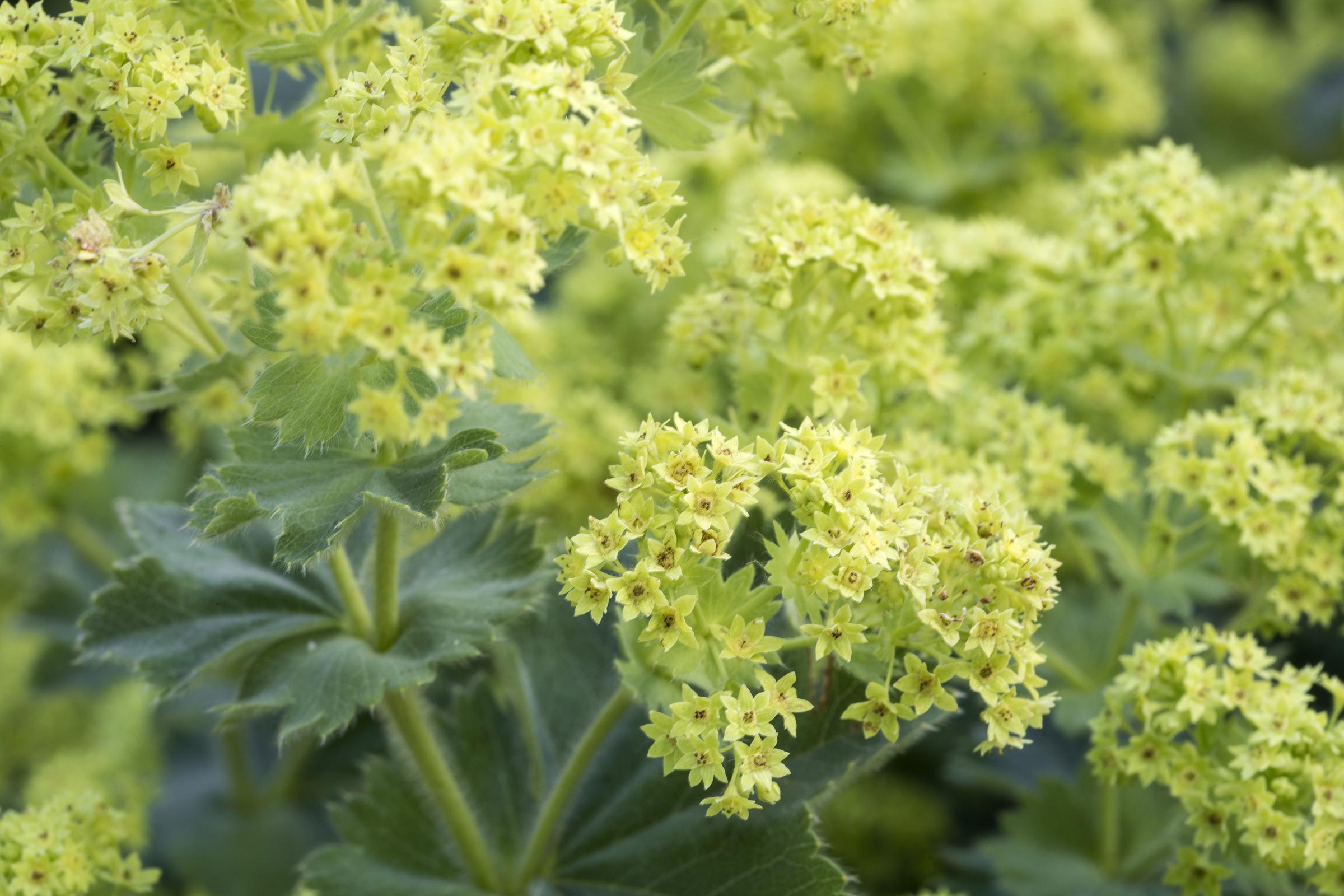 Kerti zöld növények