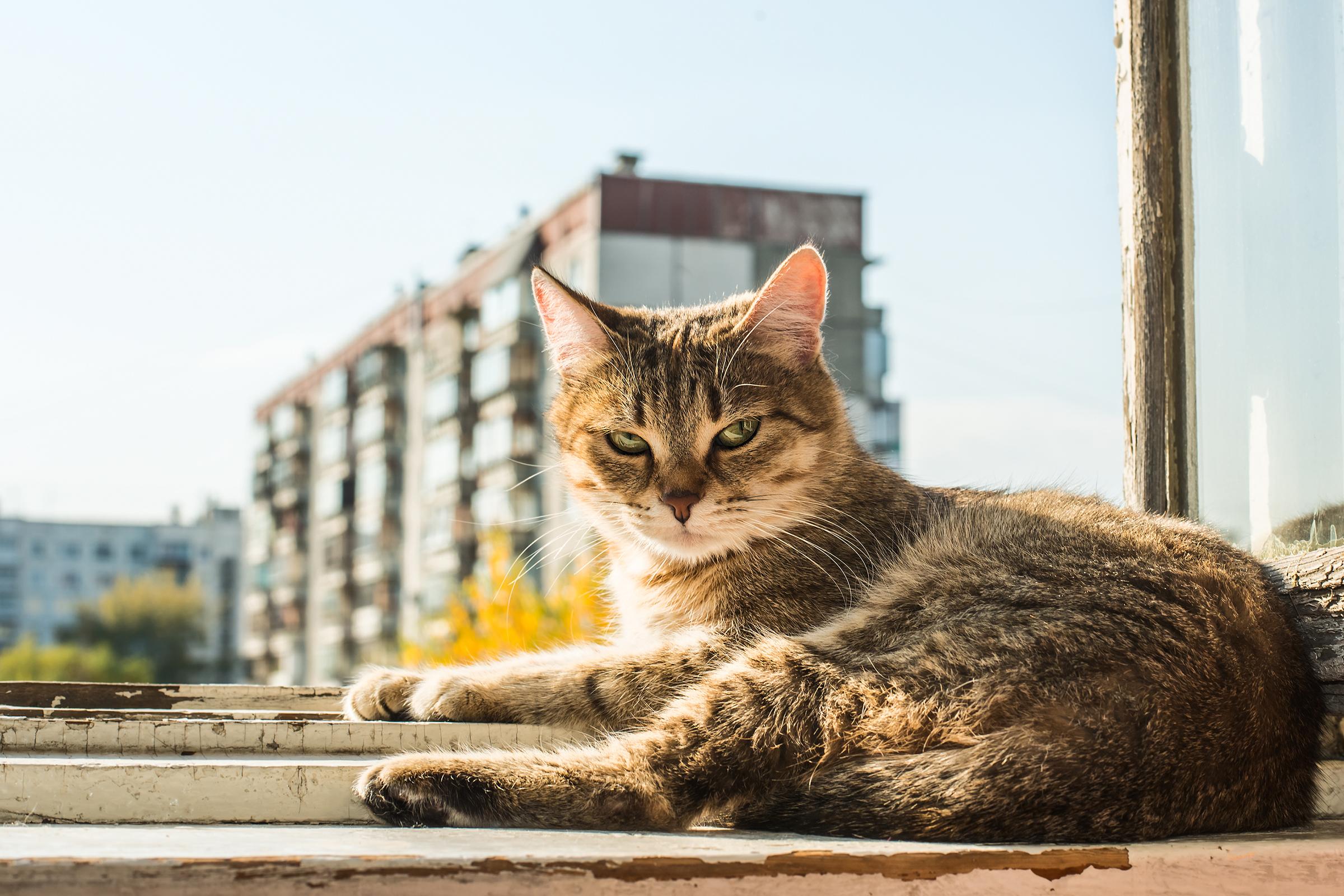 flörtöl macskák