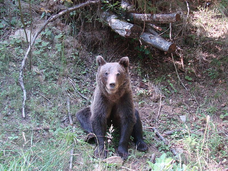 Hasznos tudnivalók ember-medve találkozás esetére