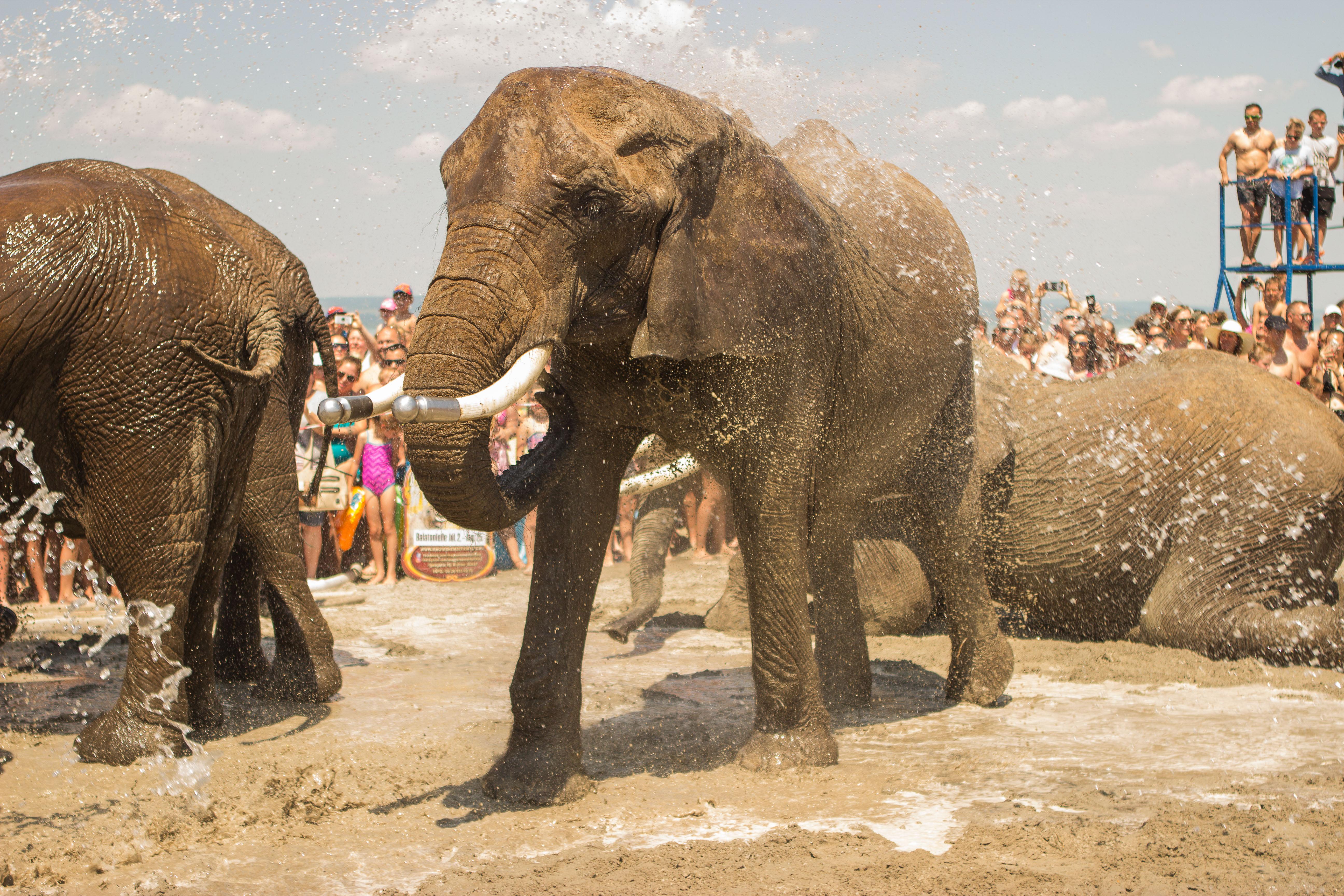 elefántok látványa)