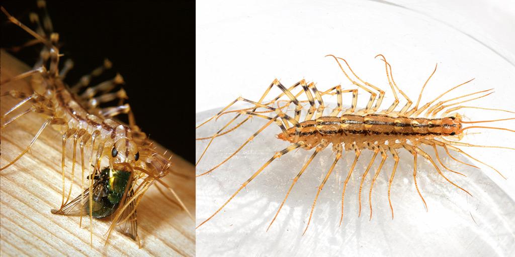 olcsó gyógyszer az emberi test parazitái ellen papilloma vírus okai és következményei