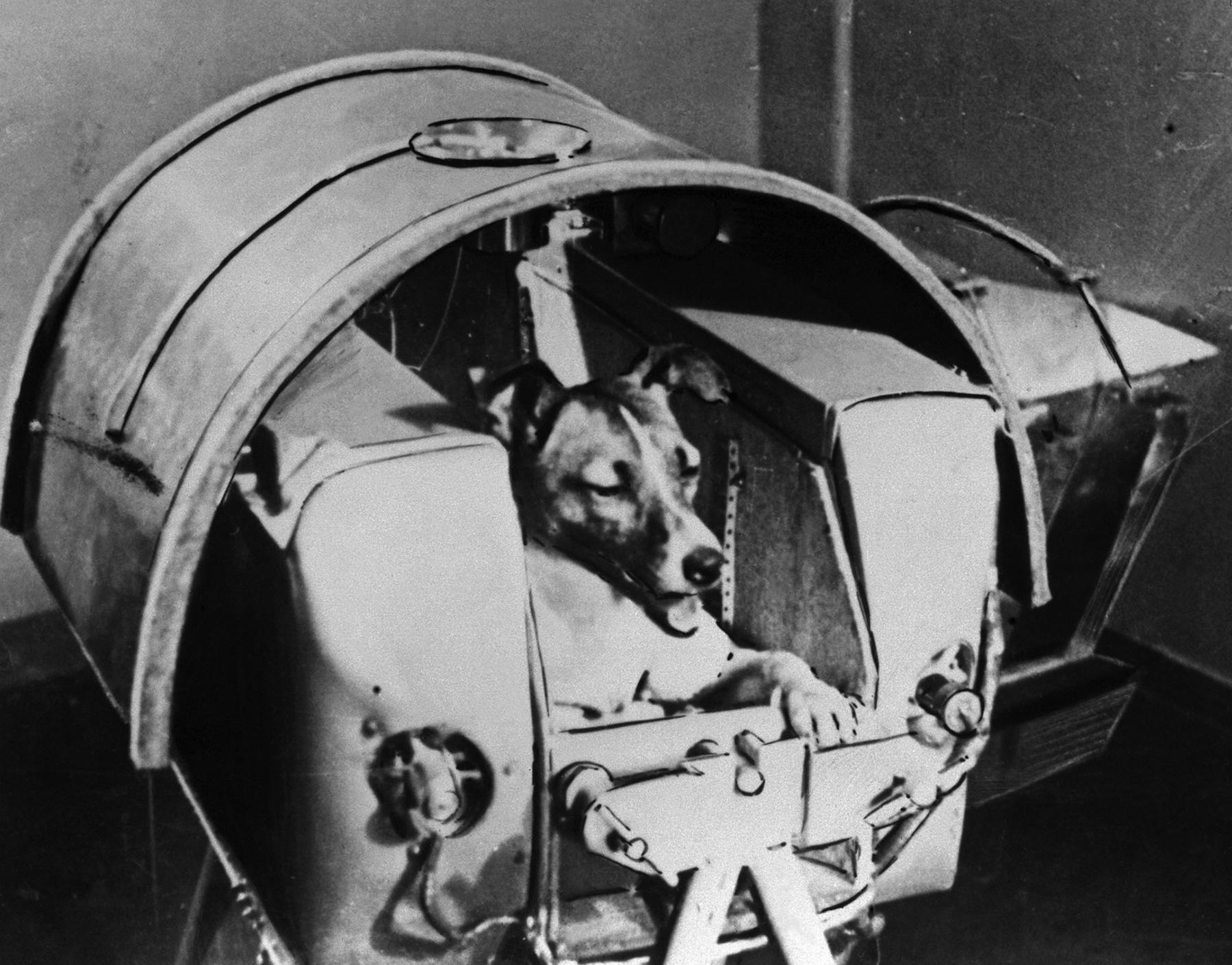 Több száz állatot küldtek a történelem során az űrbe