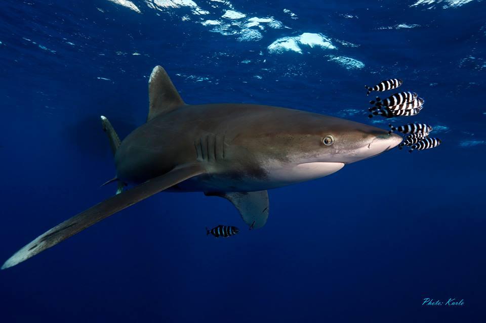 randi cápa mate 1 randevú bejelentkezés