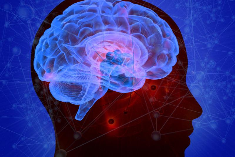 agyi látásfeldolgozás