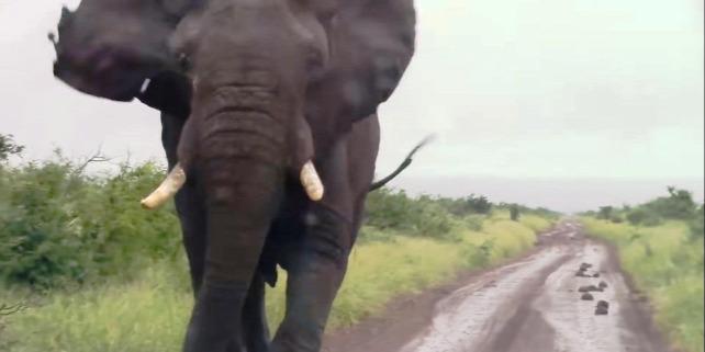 Forrás:  Kruger National Park