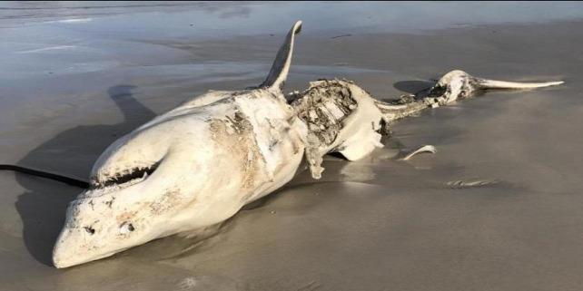Forrás: (Hennie Otto/Marine Dynamics/Dyer Island Conservation Trust)