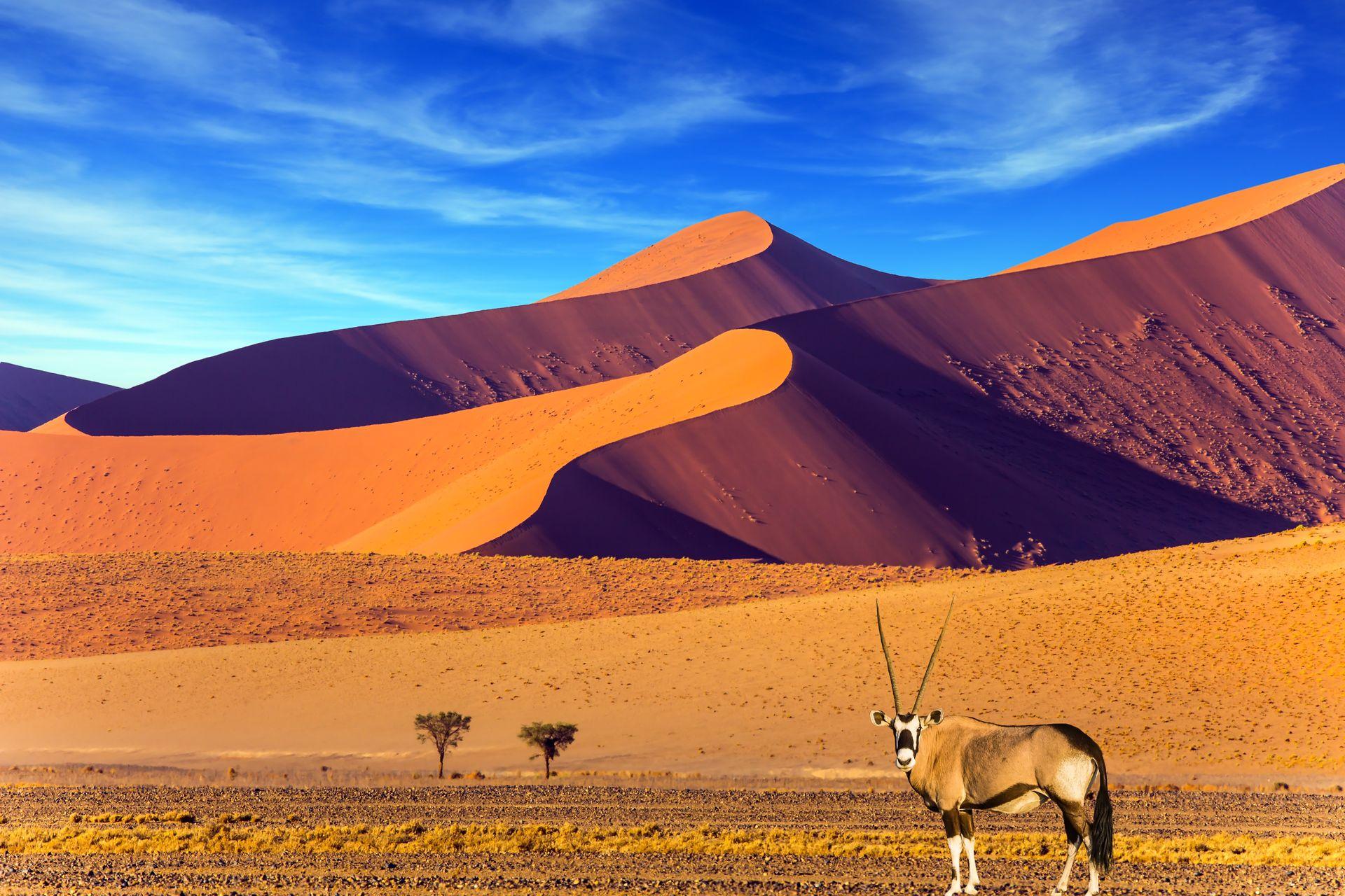Azt gondolja, hogy a sivatagok unalmasak? Bebizonyítjuk az ellenkezőjét!