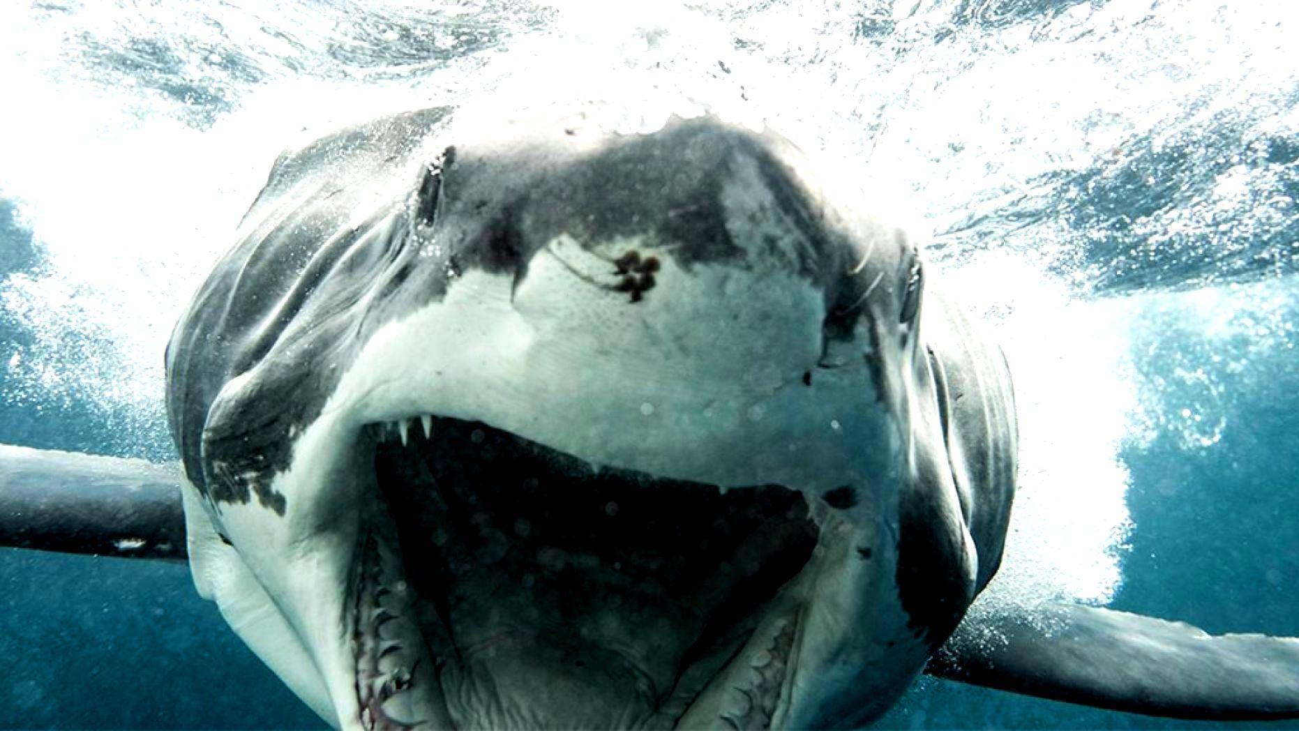 mi a cápák látványa