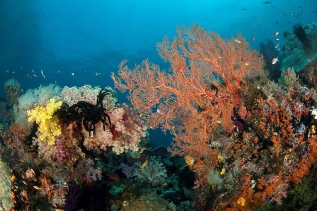 Korallok méter mélyen! - Ecolounge