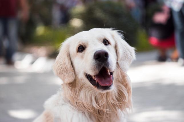 Miért fontos a kutyák bejelentése?