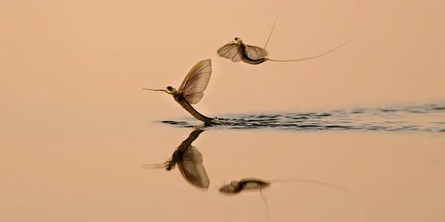 Forrás: Barbalics Nándor természetfotós