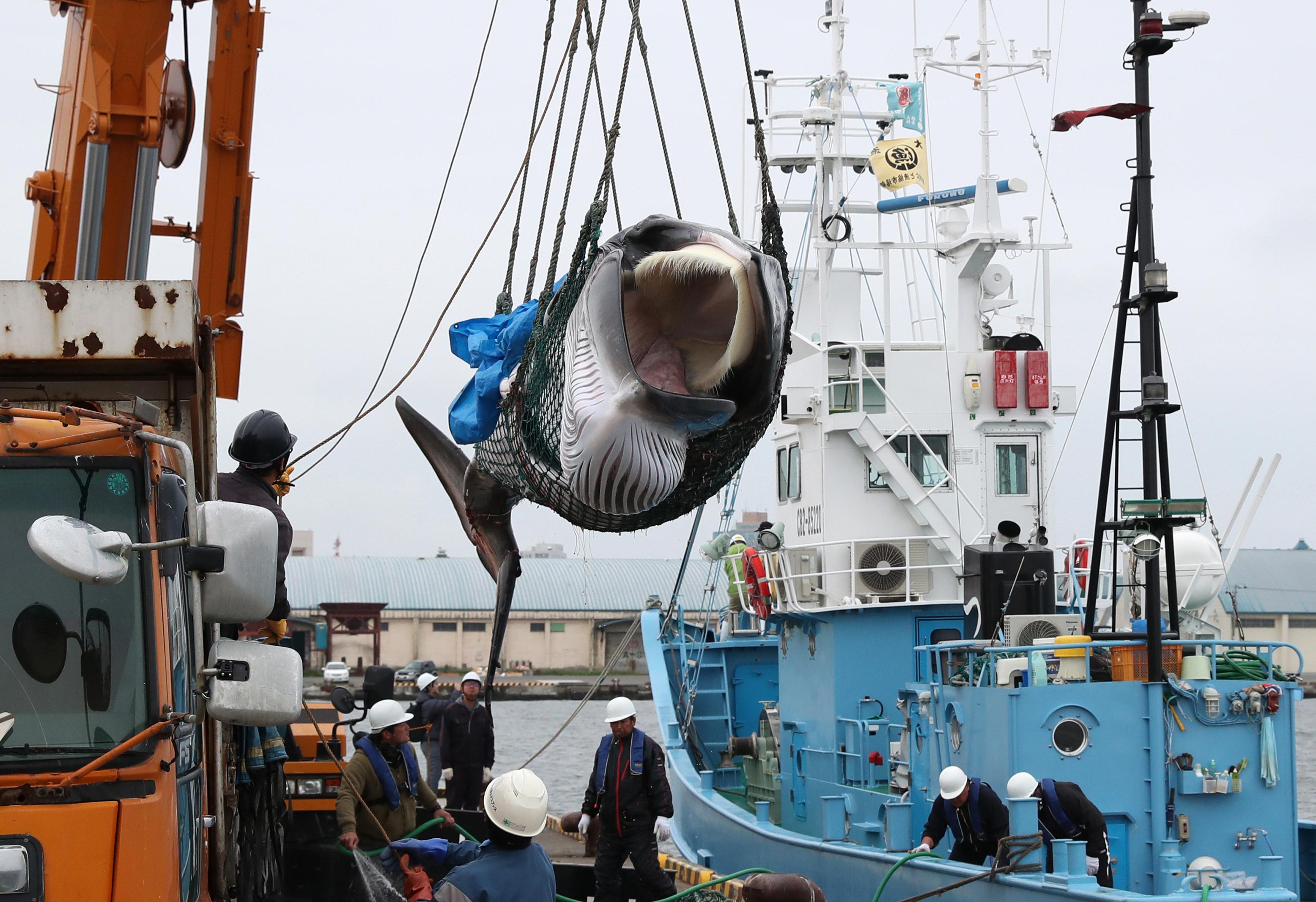 Oroszország betiltja a bálnák kereskedelmi célú vadászatát - krónika