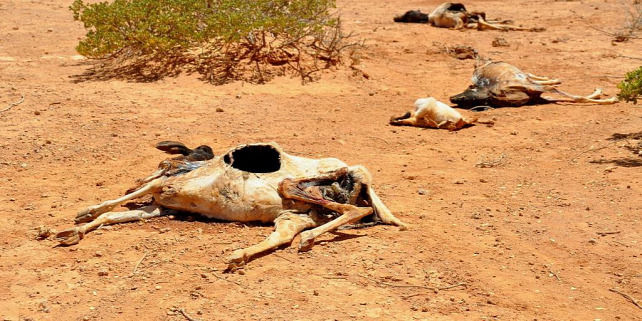 Forrás: https://en.wikipedia.org/wiki/2011_East_Africa_drought#/media/File:2011_Horn_of_Africa_famine_Oxfam_01.jpg